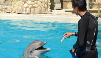Asamblea Legislativa prohíbe espectáculos terapia delfines
