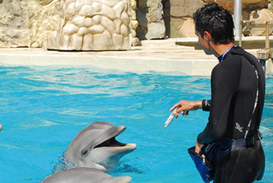 Asamblea legislativa proh be espect culos terapia delfines for Ciudad com ar espectaculos