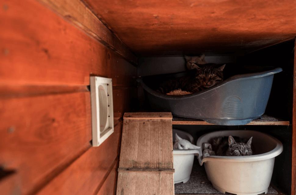 Este albergue para gatos ha estado en operación desde 1968. (AP)