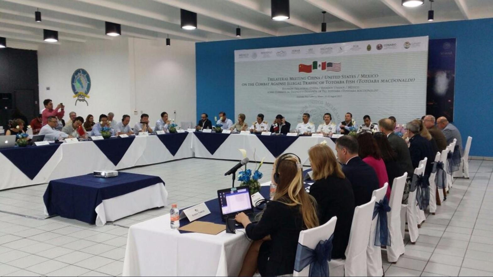 Pacto con EU y China contra tráfico de totoaba