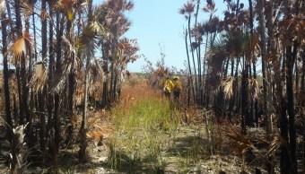 Incendio consume 600 hectáreas en reserva de Yucatán