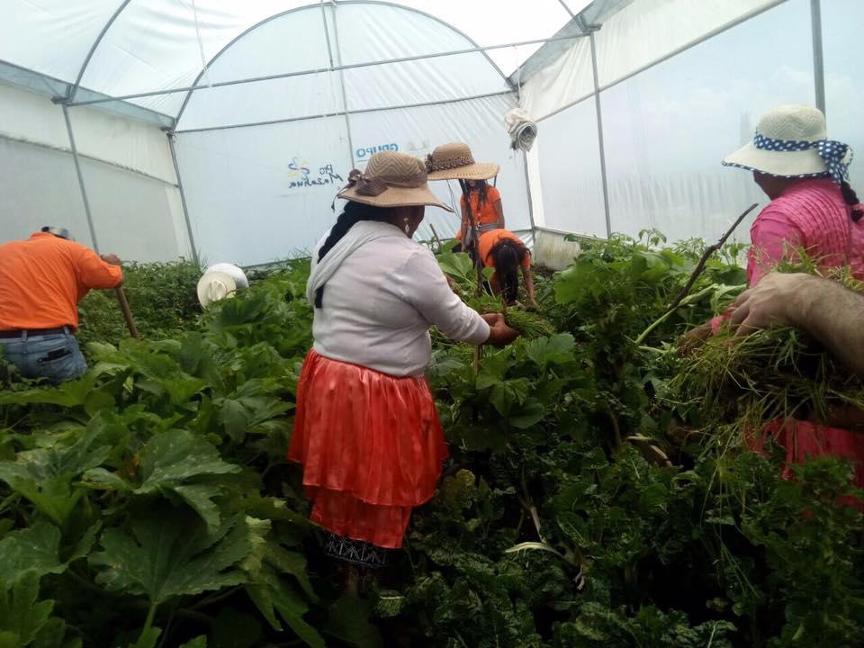 Invernadero donde los mazahuas cultivan sus alimentos