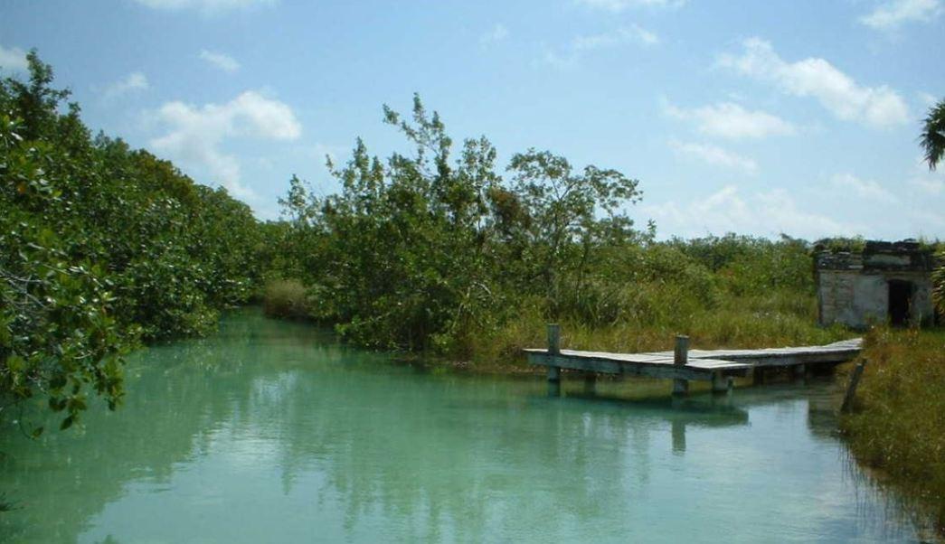Autoridades de Yucatán rehabilitan 700 hectáreas de manglares