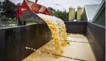 Miles de huevos son desechados en en una granja Holanda