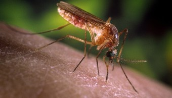 Incremento de dengue deja dos muertos en Sonora