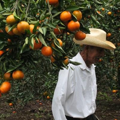 Pequeños campesinos mexicanos, en contra del TLCAN