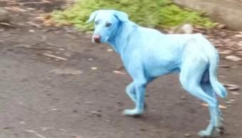 Contaminación química provoca que perros callejeros se pinten de azul