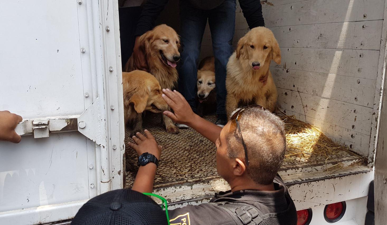 Rescatan 33 perros de criadero clandestino en Iztapalapa (Nota y video)