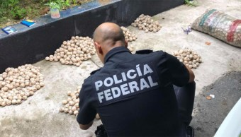 policias federales decomisan miles de huevos de tortuga en oaxaca