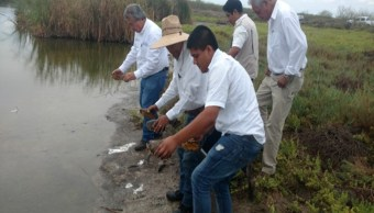 Personal de Profepa libera a varios reptiles en Culiacán