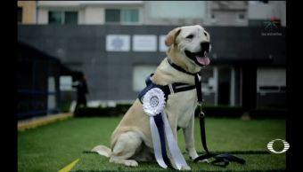 Se retira René oficial canino PF