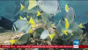 Piden aumentar áreas marinas protegidas en México