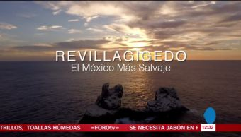 Documental muestra la riqueza natural de las islas Revillagigedo