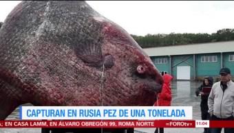 Extra, Extra: Pescan en Rusia pez de una tonelada