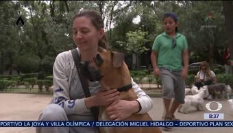 Sobrevivientes del sismo buscan sus mascotas en la CDMX
