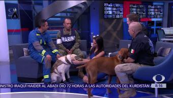 'Frida' y 'Titán', perros rescatistas y héroes, en Al Aire