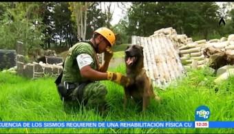 Binomios caninos de Sedena, clave en rescates tras sismos