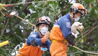 mexico despide honores brigadistas japoneses sismo