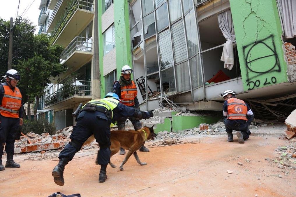 binomios caninos rescate sismo perros adiestrados