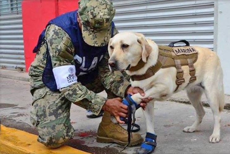 Binomials canines involved in rescue work after earthquake - News Telecast 1