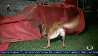 Binomios Caninos Importantes Horas Difíciles