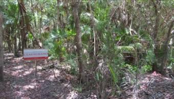 Clausura Profepa predio en Tulum, Quintana Roo