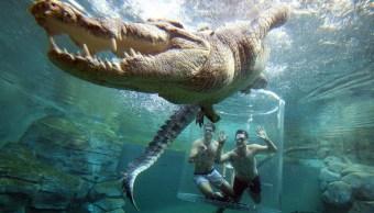 Parque de Australia permite nadar a turistas con cocodrilos