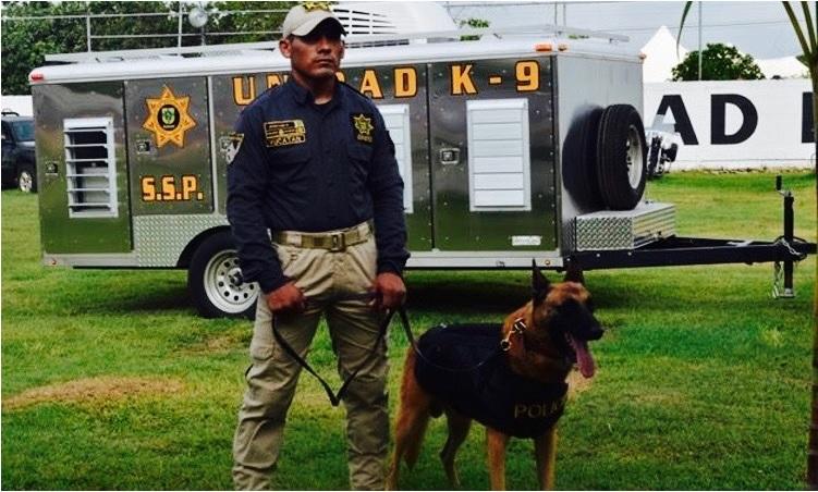 25 perros detectores refuerzan operativos de seguridad en 9 estados de México