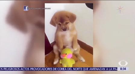 Tierno Regaño Cachorrito Regañado Redes Sociales