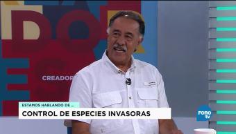 Especies Invasoras Ecosistema Héctor Espinosa Biólogo De La Unam