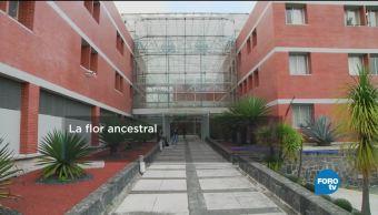 Flor Ancestral Especialistas Facultad Biología