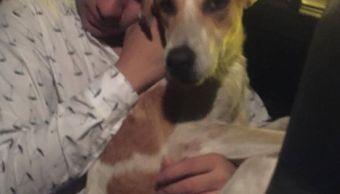 Joven adopta perro al sallir de antro