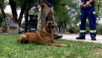 'Maya' regresa a Nuevo León tras rescatar