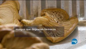 Medicamentos Contaminan Agua Especialistas Del Ipn