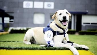 el oficial canino se retira por un tumor en la nariz