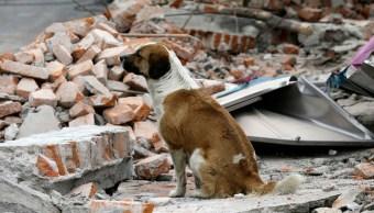 Oaxaca Chiapas, perros, mascotas, sismo
