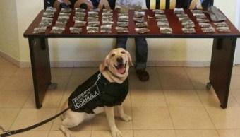 Vendedor de Drogas, Perro Policía, Foto, Sonriente, Feliz, Saltillo