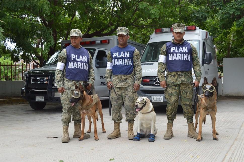 perros rescatistas, Frida labrador, sección canina, Oaxaca