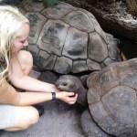 Zoológicos de Florida trasladan a animales a refugios por llegada de 'Irma'