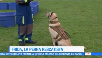 Frida, la perra rescatista