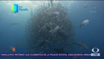 Biodiversidad marina, verdadero tesoro de la Isla del Coco