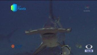 Un monte submarino es icono en la Isla del Coco