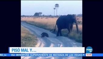 La probadita de la Noche de En Una Hora: Elefante bebé