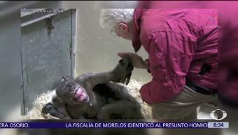 Antes de morir, un chimpancé sonríe al ver a su cuidador