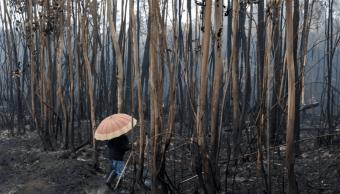 Cientos de hectáreas fueron arrasadas por el fuego en Portugal