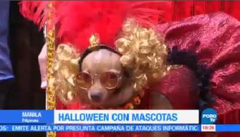 Halloween Mascotas Manila Filipinas Disfrazados