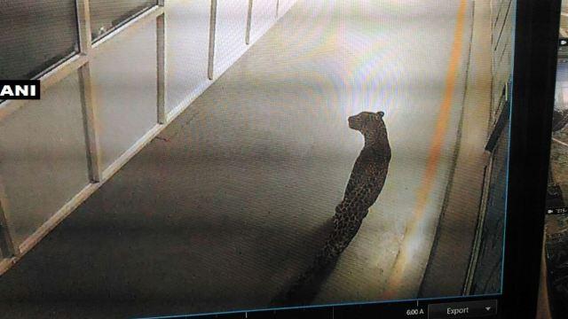 Leopardo obliga a detener la producción en fábrica automovilística en India