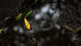 Pronostican lluvias en 20 estados del país debido a ondas tropicales