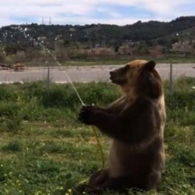 Captan a perro y oso divertirse con manguera de agua en España