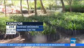 Reforestación San Luis Potosí Combatir Sequía Incendios Forestales Conafort